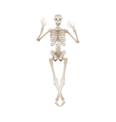 cheerful skeleton dancing pose for halloween or vector image