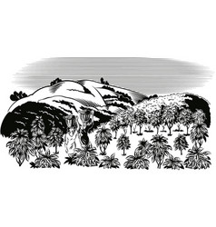 Coffee plantation vector