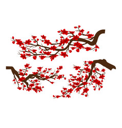branches of red blossoming sakura japanese vector image