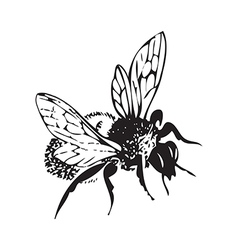 Engraving honey flying bee isolated on white vector