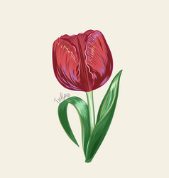 hand drawn red tulip in vector image