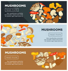 Natural ripe mushrooms from forest grown without vector