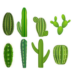 realistic detailed green cactus plants set vector image