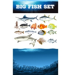 Sea animals and ocean scene vector image