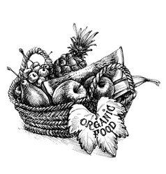 basket full of fruits organic food vector image