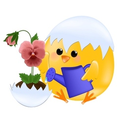 Chick watering pansies vector image