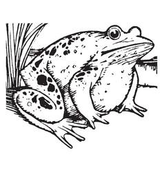Aesop the proud frog vintage vector