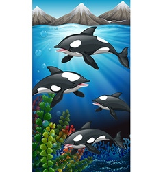 Killer whales swimming under the sea vector