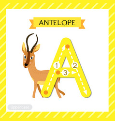 Letter a uppercase tracing antelope vector