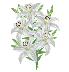 Lily flower bouquet isolated on white background vector