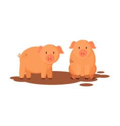 Pigs farm animals closeup vector
