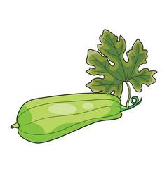 ripe zucchini green color cartoon isolated vector image