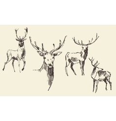 Set of deers engraving vintage hand drawn sketch vector image