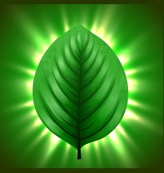 green leaf with light beams eco nature background vector image