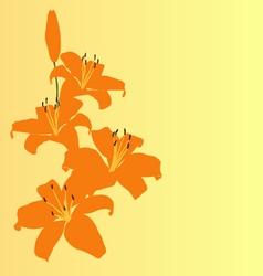 Orange lily flower background card vector