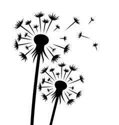 The dandelion flower vector