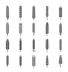 wheat ears icon set agriculture symbol collection vector image