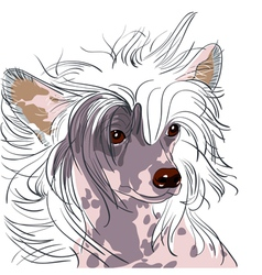 Chinese crested dog vector