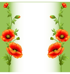 background with bright flowers poppy vector image