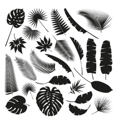 Black Tropical Leaves Collection isolate vector image vector image