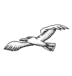 cartoon image of seagull vector image vector image