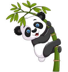 Cute funny baby panda hanging on a bamboo tree vector image