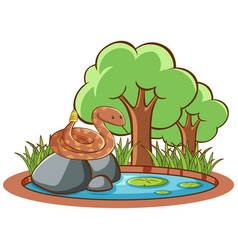 isolated picture snake on rock vector image