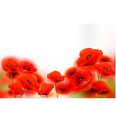 red poppy flowers background vector image