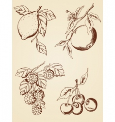 Hand drawn berries and fruits vector