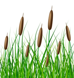 reed with grass vector image