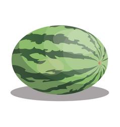 cartoon watermelon sliced sweet watermelon vector image
