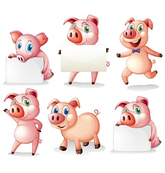 Pigs with empty signboards vector image