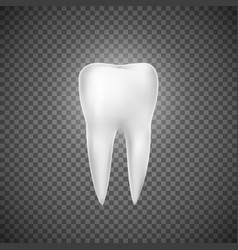 Realistic tooth dental care and tooth vector