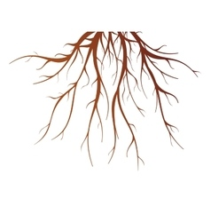 Tree Root Isolated vector