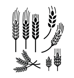 wheat icon vector image
