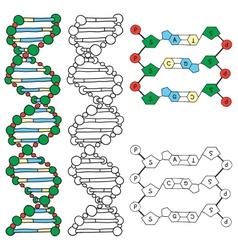 DNA - helix molecule model vector image