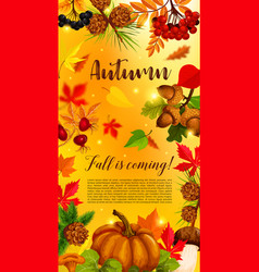 autumn banner with pumpkin and fallen leaves vector image