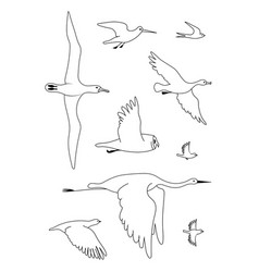 Birds black drawing line silhouette image vector
