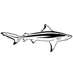 Bull shark vector