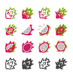 dragon fruit icon set vector image