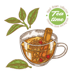 hand drawn cup of tea herbal tea with cinnamon vector image