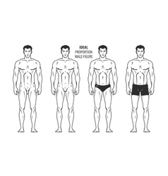 Ideal proportion male figure Hand-drawn outline vector image