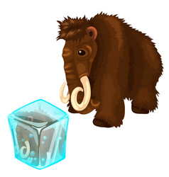 Shaggy mammoth and it copy frozen in ice cube vector