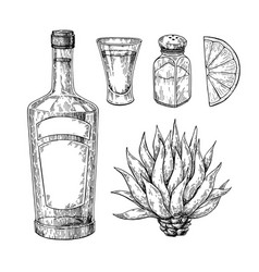tequila bottle blue agave salt shaker and shot vector image