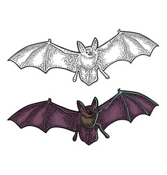 bat flying with scary face black vintage vector image
