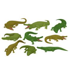 collection of crocodiles predatory amphibian vector image