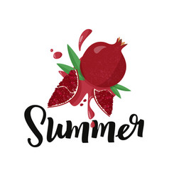 Hand drawn pomegranate on white background vector