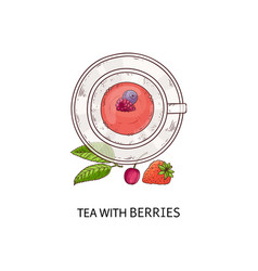 tea with berries - pretty red drink in glass cup vector image