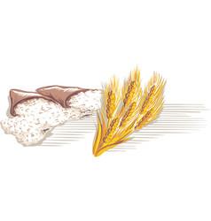 Wheat flour and ears vector