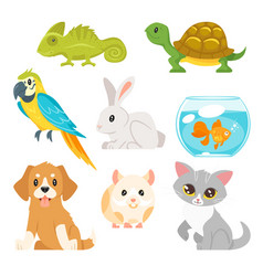 Set of home animal pet vector